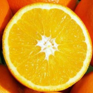 东北大橙子