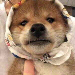 江家的小狗子