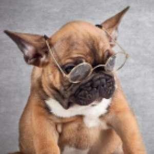 爱读书的狗